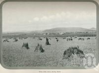 "<span class=""caption-caption"">Wheat field at Allora</span>. <br />From <span class=""caption-book"">Australia Unlimited</span>, <span class=""caption-creator"">Edwin J Brady</span>, <span class=""caption-publisher"">George Robertson & Co</span>, Melbourne, 1918, collection of <span class=""caption-contributor"">Centre for the Government of Queensland</span>."