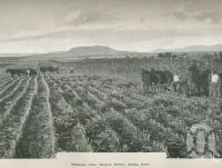"""<span class=""""caption-caption"""">Hermitage farm, Warwick District</span>. <br />From <span class=""""caption-book"""">Australia Unlimited</span>, <span class=""""caption-creator"""">Edwin J Brady</span>, <span class=""""caption-publisher"""">George Robertson & Co</span>, Melbourne, 1918, collection of <span class=""""caption-contributor"""">Centre for the Government of Queensland</span>."""