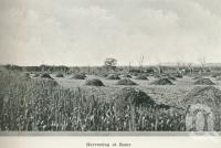 """<span class=""""caption-caption"""">Harvesting at Roma</span>. <br />From <span class=""""caption-book"""">Australia Unlimited</span>, <span class=""""caption-creator"""">Edwin J Brady</span>, <span class=""""caption-publisher"""">George Robertson & Co</span>, Melbourne, 1918, collection of <span class=""""caption-contributor"""">Centre for the Government of Queensland</span>."""
