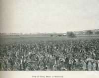 "<span class=""caption-caption"">Crop of young maize at Westbrook</span>. <br />From <span class=""caption-book"">Australia Unlimited</span>, <span class=""caption-creator"">Edwin J Brady</span>, <span class=""caption-publisher"">George Robertson & Co</span>, Melbourne, 1918, collection of <span class=""caption-contributor"">Centre for the Government of Queensland</span>."