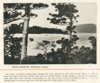 "<span class=""caption-caption"">Shute Harbour, Whitsunday Passage</span>. <br />From <span class=""caption-book"">Pictorial Grandeur of Cairns</span>, Cairns, c1935, collection of <span class=""caption-contributor"">Centre for the Government of Queensland</span>."