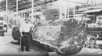 """<span class=""""caption-caption"""">Cedar log at the 1897 exhibition, Bowen Park. Product of the North Queensland Timber Co</span>. <br />From <span class=""""caption-book"""">Queensland Agricultural Journal</span>, 1897, collection of <span class=""""caption-contributor"""">Fryer Library, UQ</span>."""