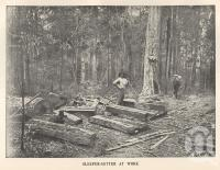"<span class=""caption-caption"">Sleeper-getter at work, Blackall Range</span>. <br />From <span class=""caption-book"">Queensland Agricultural Journal</span>, 1900, collection of <span class=""caption-contributor"">Fryer Library, UQ</span>."