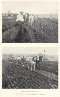 "<span class=""caption-caption"">Laidley ploughing patch. James Taylor, Pittsworth, champion ploughman</span>. <br />From <span class=""caption-book"">Queensland Agricultural Journal</span>, 1900, collection of <span class=""caption-contributor"">Fryer Library, UQ</span>."