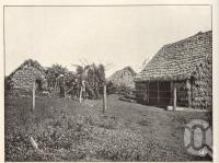 """<span class=""""caption-caption"""">Kanaka' Huts, Farnbro, Childers</span>. <br />From <span class=""""caption-book"""">Queensland Agricultural Journal</span>, 1904, collection of <span class=""""caption-contributor"""">Fryer Library, UQ</span>."""