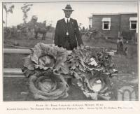 "<span class=""caption-caption"">Prize cabbages, Stanthorpe district</span>. <br />From <span class=""caption-book"">Queensland Agricultural Journal</span>, 1924, collection of <span class=""caption-contributor"">Fryer Library, UQ</span>."