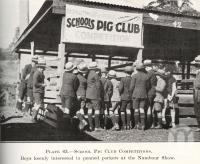 "<span class=""caption-caption"">School Pig Club Competitions at the Nambour Show</span>. <br />From <span class=""caption-book"">Queensland Agricultural Journal</span>, 1925, collection of <span class=""caption-contributor"">Fryer Library, UQ</span>."