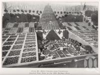 "<span class=""caption-caption"">Fruit exhibit from Palmwoods</span>. <br />From <span class=""caption-book"">Queensland Agricultural Journal</span>, 1931, collection of <span class=""caption-contributor"">Fryer Library, UQ</span>."