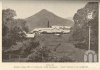 "<span class=""caption-caption"">Mulgrave Sugar Mill at Gordonvale, north Queensland. Walsh's Pyramid in the background</span>. <br />From <span class=""caption-book"">Queensland Agricultural Journal</span>, 1935, collection of <span class=""caption-contributor"">Fryer Library, UQ</span>."