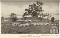 """<span class=""""caption-caption"""">Ewes and lambs, Glengallan, Warwick District</span>. <br />From <span class=""""caption-book"""">Queensland Agricultural Journal</span>, 1937, collection of <span class=""""caption-contributor"""">Fryer Library, UQ</span>."""