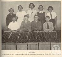 """<span class=""""caption-caption"""">The citrus fruit packing class at Montville State school</span>. <br />From <span class=""""caption-book"""">Queensland Agricultural Journal</span>, 1939, collection of <span class=""""caption-contributor"""">Fryer Library, UQ</span>."""