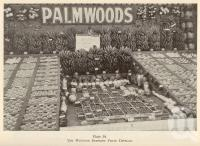 "<span class=""caption-caption"">Palmwoods District fruit display</span>. <br />From <span class=""caption-book"">Queensland Agricultural Journal</span>, 1940, collection of <span class=""caption-contributor"">Fryer Library, UQ</span>."