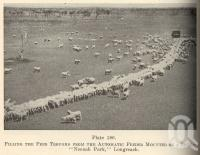 """<span class=""""caption-caption"""">Filling the feed troughs 'Neenah Park', Longreach</span>. <br />From <span class=""""caption-book"""">Queensland Agricultural Journal</span>, 1949, collection of <span class=""""caption-contributor"""">Fryer Library, UQ</span>."""