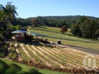 "<span class=""caption-caption"">Big Pineapple plantation</span>, 2009. <br />Digital image, collection of <span class=""caption-contributor"">Centre for the Government of Queensland MS</span>."