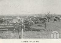 "<span class=""caption-caption"">Cattle watering, Tobermorey Station, Urandangie</span>, 1939. <br />Newspaper, collection of <span class=""caption-contributor"">John Young</span>."