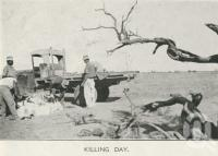 "<span class=""caption-caption"">Killing day, Tobermorey Station, Urandangie</span>, 1939. <br />Newspaper, collection of <span class=""caption-contributor"">John Young</span>."