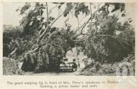 "<span class=""caption-caption"">Fig in Paxton Street, North Ward, Townsville cyclone</span>, 1940. <br />Newspaper, collection of <span class=""caption-contributor"">John Young</span>."
