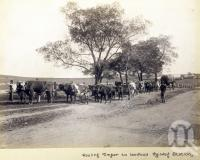 "<span class=""caption-caption"">Hauling timber to Lowood railway station</span>, date unknown. <br />Photograph, collection of <span class=""caption-contributor"">Mobsby Collection, Fryer Library, UQ</span>."