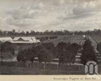 "<span class=""caption-caption"">Gutteridge's Vineyard at Belle Vue</span>, date unknown. <br />Photograph, collection of <span class=""caption-contributor"">Mobsby Collection, Fryer Library, UQ</span>."