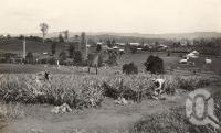 "<span class=""caption-caption"">Woombye pineapple farm</span>, date unknown. <br />Photograph, collection of <span class=""caption-contributor"">Mobsby Collection, Fryer Library, UQ</span>."
