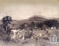 "<span class=""caption-caption"">Hambledon Plantation Cairns</span>, 1890. <br />Photograph, collection of <span class=""caption-contributor"">Richardson Collection, Fryer Library, UQ</span>."