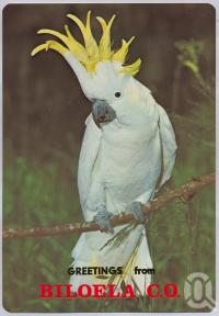 "<span class=""caption-caption"">White Cockatoo, Biloela</span>, c1970-2000. <br />Postcard, collection of <span class=""caption-contributor"">Murray Views Collection</span>."