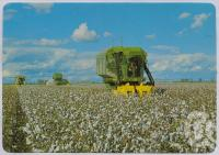 """<span class=""""caption-caption"""">Cotton Harvesting, Callide Valley</span>, c1970-2000. <br />Postcard, collection of <span class=""""caption-contributor"""">Murray Views Collection</span>."""