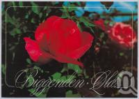 """<span class=""""caption-caption"""">Rose Capital, Biggenden</span>, c1970-2000. <br />Postcard, collection of <span class=""""caption-contributor"""">Murray Views Collection</span>."""