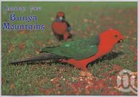 "<span class=""caption-caption"">King Parrot, Bunya Mountains</span>, c1970-2000. <br />Postcard, collection of <span class=""caption-contributor"">Murray Views Collection</span>."