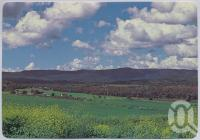 "<span class=""caption-caption"">Bunya Mountains</span>, c1970-2000. <br />Postcard, collection of <span class=""caption-contributor"">Murray Views Collection</span>."
