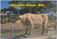 "<span class=""caption-caption"">Bullock Statue, Banana</span>, c1970-2000. <br />Postcard, collection of <span class=""caption-contributor"">Murray Views Collection</span>."