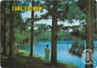 "<span class=""caption-caption"">Glimpse of lake through pines, Lake Eacham, Atherton Tableland</span>, c1970-2000. <br />Postcard, collection of <span class=""caption-contributor"">Murray Views Collection</span>."