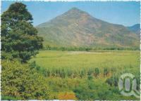 "<span class=""caption-caption"">Walsh's Pyramid, height 3,029 feet, and surrounding cane fields, Gordonvale, near Cairns</span>, c1970-2000. <br />Postcard, collection of <span class=""caption-contributor"">Murray Views Collection</span>."