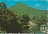 "<span class=""caption-caption"">Walsh's Pyramid, height 923 metres (3027 ft) stands like a sentinel over the Mulgrave River and the canefields of Gordonvale</span>, c1970-2000. <br />Postcard, collection of <span class=""caption-contributor"">Murray Views Collection</span>."