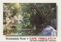 "<span class=""caption-caption"">The cool clear water of Woobadda Creek and the rainforest trees and shrubs make for a tranquil scene, Woobadda River, Cape Tribulation</span>, c1970-2000. <br />Postcard, collection of <span class=""caption-contributor"">Murray Views Collection</span>."