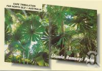 "<span class=""caption-caption"">The Licuala Ramsayi Palm reaches high competing for the life giving sunlight, Cape Tribulation</span>, c1970-2000. <br />Postcard, collection of <span class=""caption-contributor"">Murray Views Collection</span>."