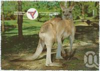 "<span class=""caption-caption"">Brisbane, Host City Commonwealth Games 1982, The Australian Kangaroo</span>, c1970-2000. <br />Postcard, collection of <span class=""caption-contributor"">Murray Views Collection</span>."