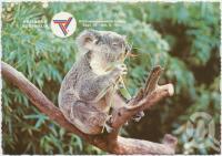 "<span class=""caption-caption"">Brisbane, Host City Commonwealth Games 1982, Koala, Australian Native Bear</span>, c1970-2000. <br />Postcard, collection of <span class=""caption-contributor"">Murray Views Collection</span>."