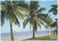 "<span class=""caption-caption"">Coconut palm-lined beach, Queensland</span>, c1970-2000. <br />Postcard, collection of <span class=""caption-contributor"">Murray Views Collection</span>."
