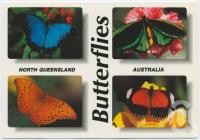"<span class=""caption-caption"">Butterflies, North Queensland</span>, c1970-2000. <br />Postcard, collection of <span class=""caption-contributor"">Murray Views Collection</span>."
