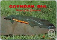 "<span class=""caption-caption"">Home of the Ceratodus, Queensland Lungfish, Gayndah</span>, c1970-2000. <br />Postcard, collection of <span class=""caption-contributor"">Murray Views Collection</span>."
