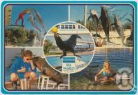 "<span class=""caption-caption"">Sea World, Gold Coast</span>, c1970-2000. <br />Postcard, collection of <span class=""caption-contributor"">Murray Views Collection</span>."