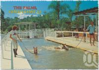 "<span class=""caption-caption"">Horse taking a daily dip in the modern horse swimming pool, The Palms Horse Stud Farm, Gold Coast, only 10 kms from Surfers Paradise at Nerang</span>, c1970-2000. <br />Postcard, collection of <span class=""caption-contributor"">Murray Views Collection</span>."