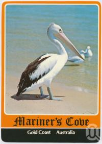 "<span class=""caption-caption"">Pelican, Mariner's Cove</span>, c1970-2000. <br />Postcard, collection of <span class=""caption-contributor"">Murray Views Collection</span>."