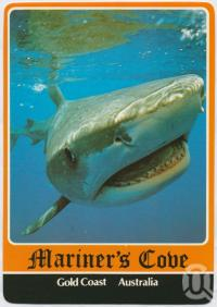 "<span class=""caption-caption"">Tiger Shark, Mariner's Cove</span>, c1970-2000. <br />Postcard, collection of <span class=""caption-contributor"">Murray Views Collection</span>."