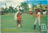 "<span class=""caption-caption"">The Palms Horse Stud Farm, Nerang, Gold Coast</span>, c1970-2000. <br />Postcard, collection of <span class=""caption-contributor"">Murray Views Collection</span>."