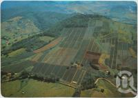 "<span class=""caption-caption"">Pineapple farms on the steep volcanic slopes at Dagun, Mary Valley - Gympie District</span>, c1970-2000. <br />Postcard, collection of <span class=""caption-contributor"">Murray Views Collection</span>."
