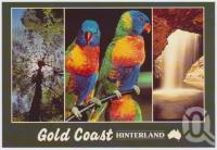 "<span class=""caption-caption"">Lamington National Park, Lorikeets, Natural Bridge Numinbah Valley, Gold Coast Hinterland</span>, c1970-2000. <br />Postcard, collection of <span class=""caption-contributor"">Murray Views Collection</span>."