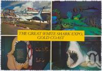 "<span class=""caption-caption"">The Great White Shark Expo, Surfers Paradise, s spectacular experience situated at Main Beach</span>, c1970-2000. <br />Postcard, collection of <span class=""caption-contributor"">Murray Views Collection</span>."