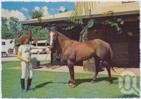 "<span class=""caption-caption"">The Palms Horse Stud Farm, at Nerang, only 10kms from Surfers Paradise, ""Another Bird"" - the Feature Stallion makes a great picture amongst the Bougainvilleas</span>, c1970-2000. <br />Postcard, collection of <span class=""caption-contributor"">Murray Views Collection</span>."